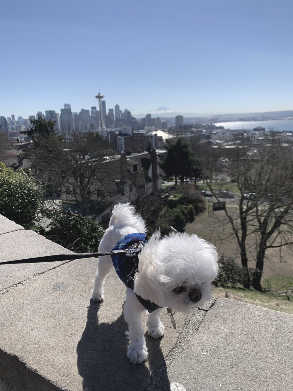 Insiders Guide To Seattle - Kerry Park - letsregale.com.jpg