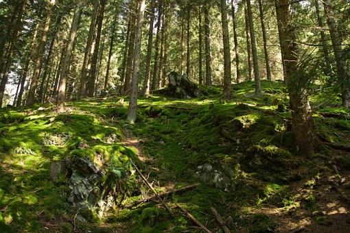 forest-610094__340.jpg