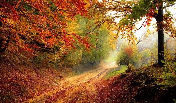 road-1072823__340.jpg