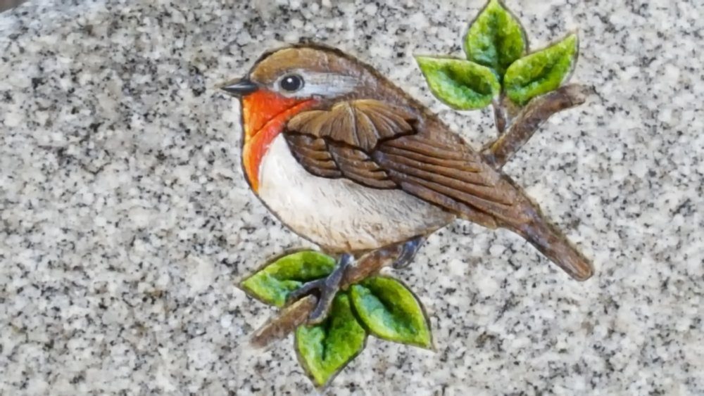 Coloured robin
