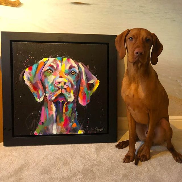 I was recently sent this photo by Murphys owner of him posing with his new portrait..:such a handsome boy 😍 . . . . . . . #petportrait #petportraits #dogportrait #dogportraits #dogportraitartist #colorfulart #colorfulartwork #colourfulart #colourfulartwork #multicolour #multicoloured #hungarianvizsla #hungarianviszla #vizla #vizlasofinstagram #vizlasarethebest #visla #vislasofinstagram #doglovers #doglove
