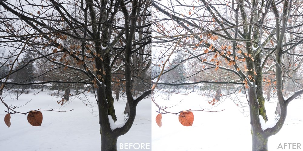 tree before after.jpg
