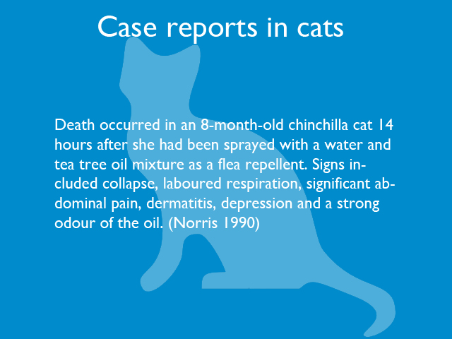case-reports-in-cats-03.jpg