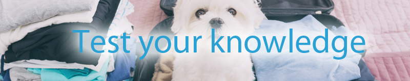 Taking-pets-abroad-test-your-knowledge.jpg