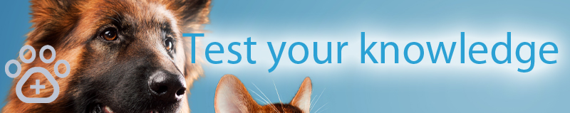 new-flea-tick-and-worming-medicines-test-your-knowledge-banner.jpg