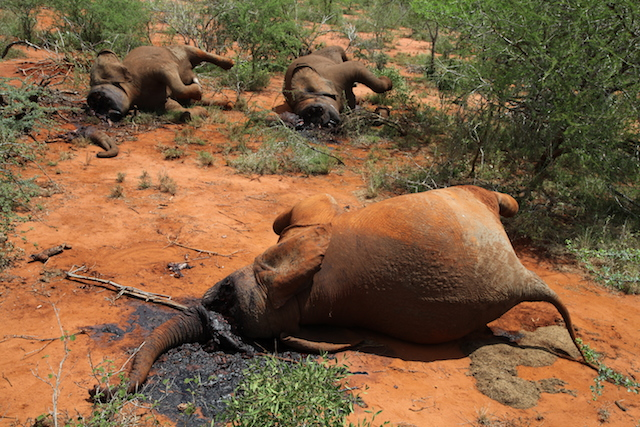 Photo courtesy of The Tsavo Trust