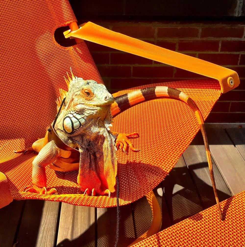 my chair.jpg