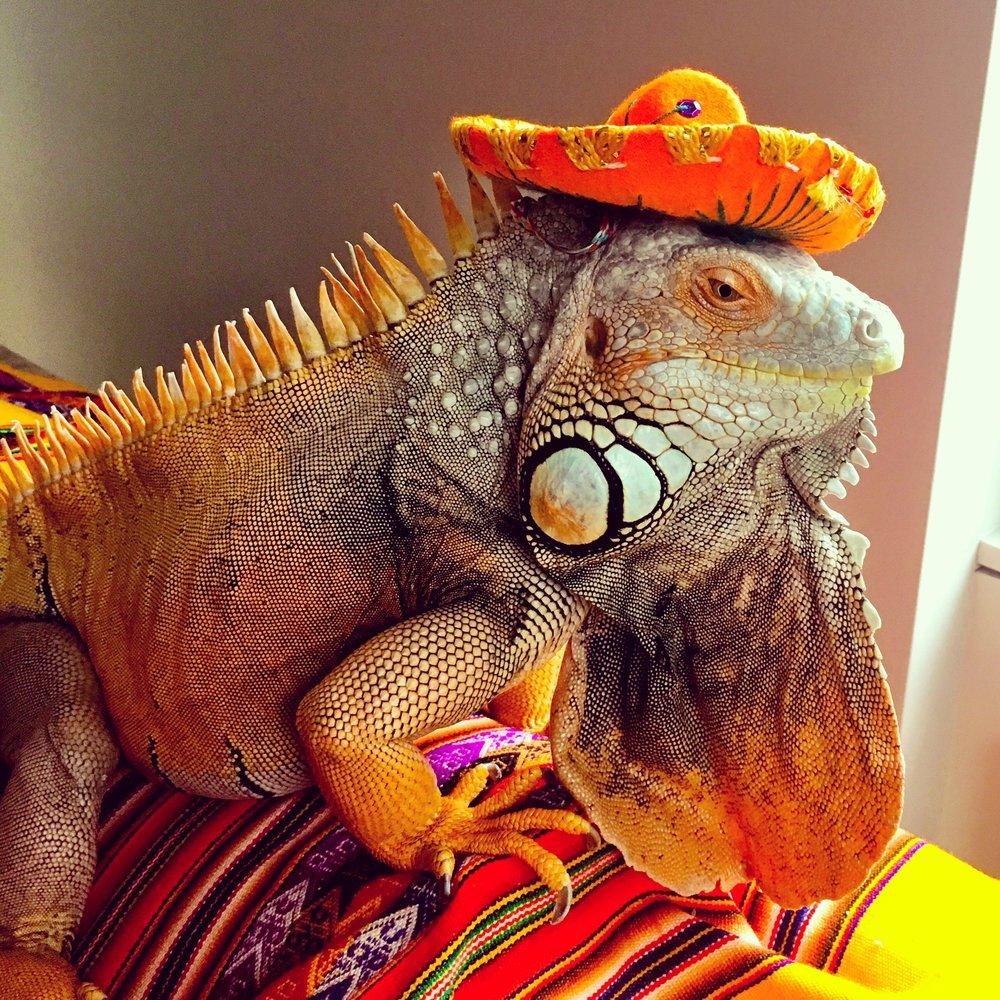 hola Mexico!.jpg