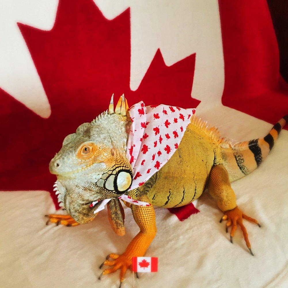 Canada Day Boy.jpg