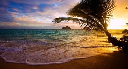 Tropical vacation.jpg
