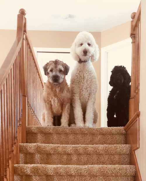 Charlie, Ollie and Finn also are waiting to fill our two-story home with little ones.
