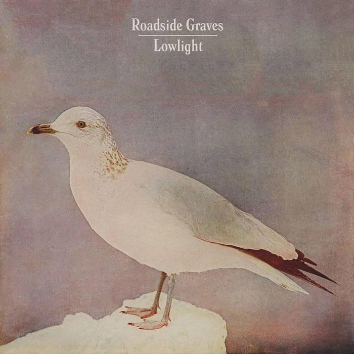 6/15 LowLight with Accidental Seabirds & Frank Lombardi