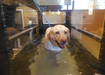 Fun rehbilitative hydrotherapy