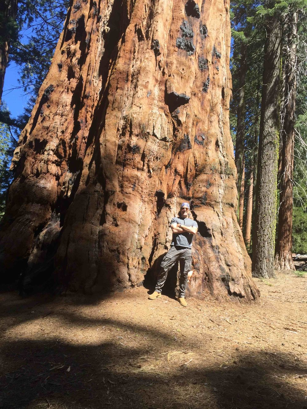 The ancient ones -- giant Sequoia's