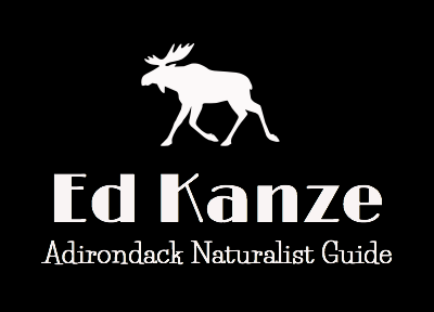 Ed Kanze, Naturalist and Adirondack Guide