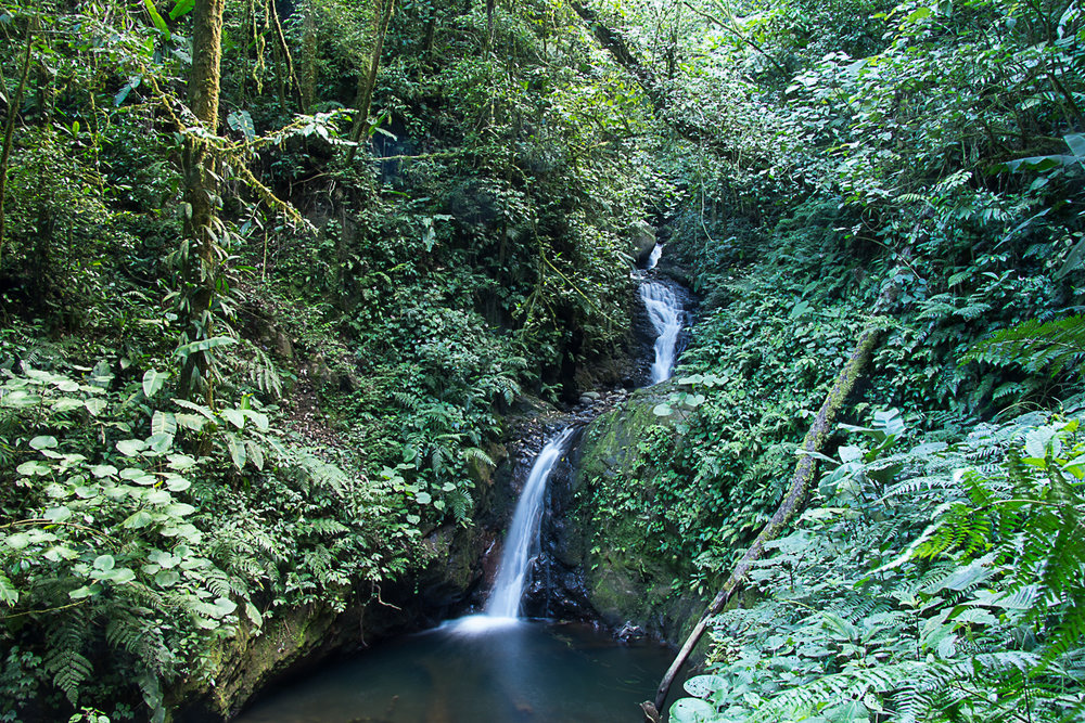 Monteverde waterfall.jpg
