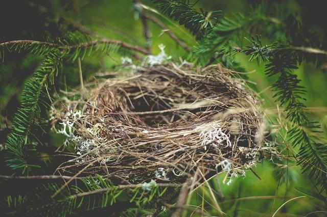 birdsnest.jpg