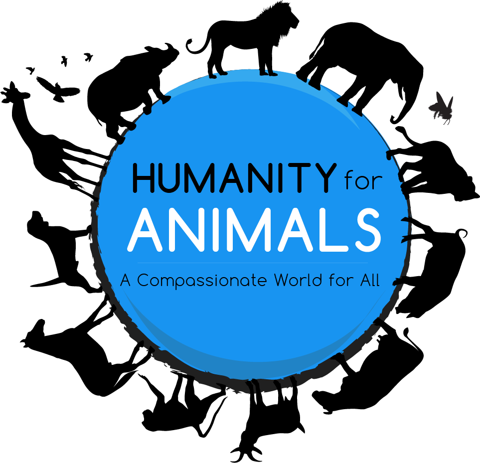 Created for a nonprofit organization focused on educating the public on animal rights