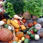 Gourds galore!