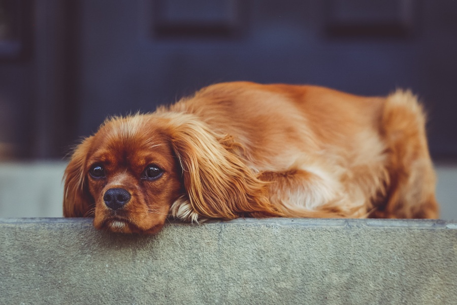 Don't make the puppy sad... find your KPIs