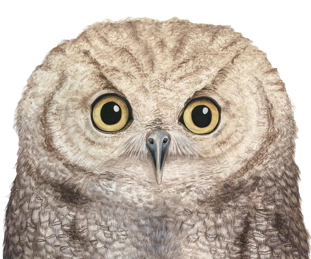 Owl - Commission