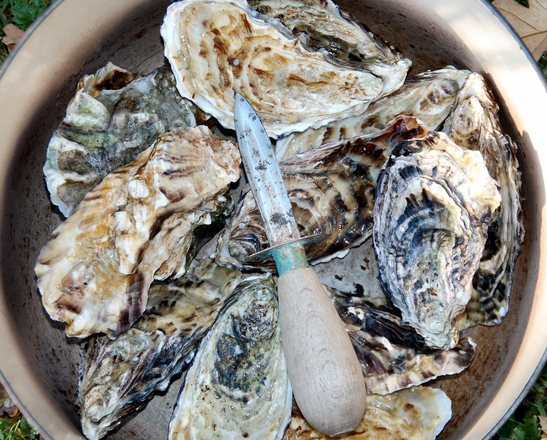 oysters-1-1320313.jpg
