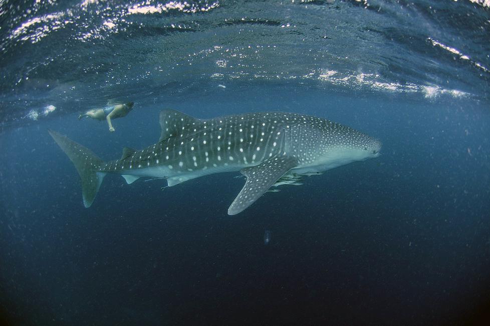 diving-big-fish.jpg