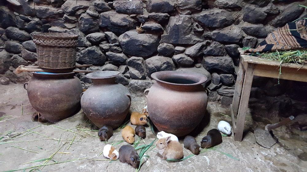 Guinea_Pig_Peru_Cuy_Food_Dinner_Peruvian_Delicacy