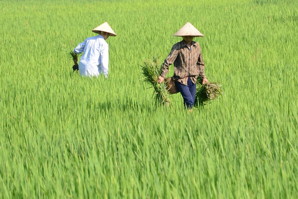 vietnam9.jpg