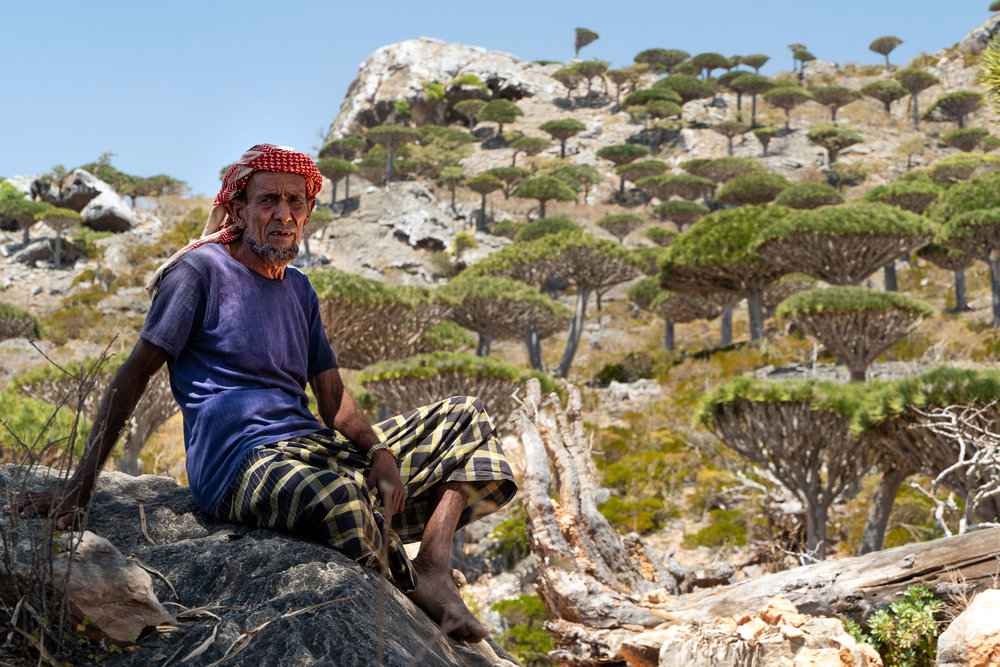 A Socotri Bedouin man takes a rest under the shade of a Dragon's Blood Tree in the Ferhmin Forest. He is from this forest and has made his home from rocks on the mountain side. He does not hike in shoes, rather preferring to walk barefoot through the rocky forest as he watches over his goats.