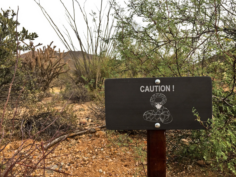 A sign warns visitors about rattlesnakes at  Saguaro National Park  near Tucson, Arizona.