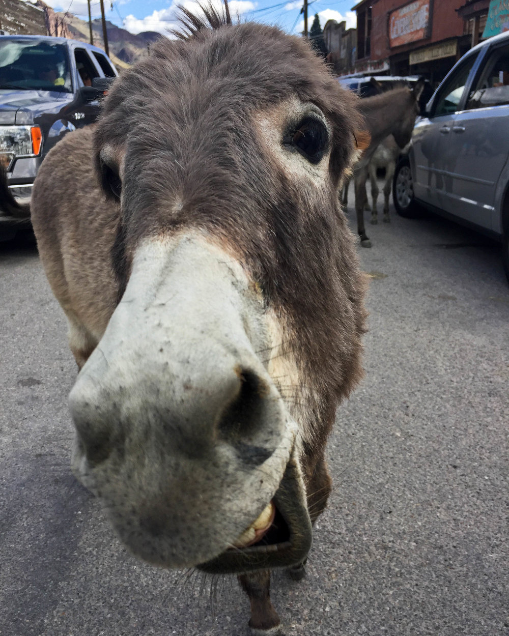 A donkey in Oatman, Arizona, reacts grumpily to having its photograph taken. 2017.