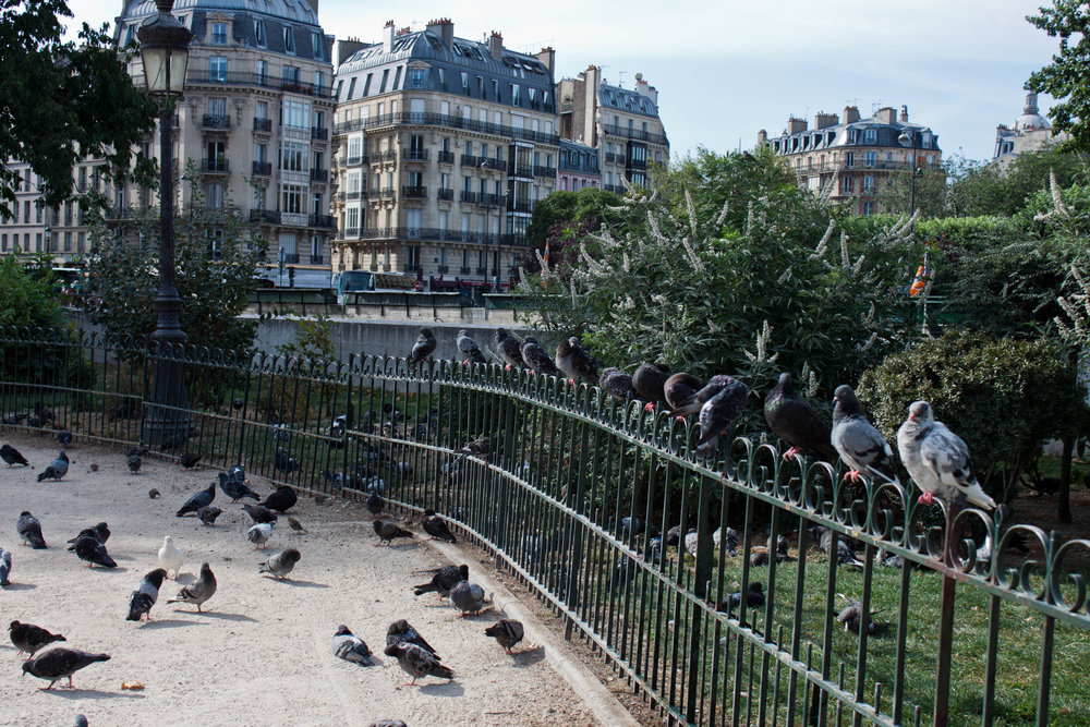 Pigeons flock near the Notre-Dame de Paris, August 2012.