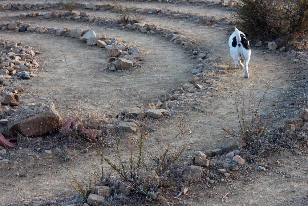 An energetic dog runs  the labyrinth at Tuna Park  near Malibu, California, 2017.