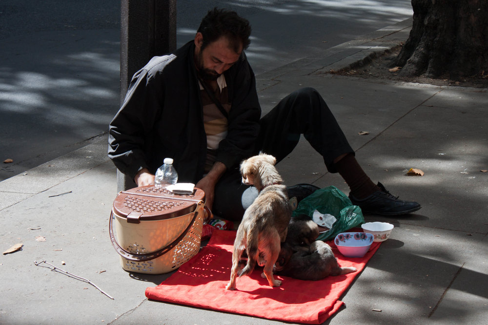 A man feeds his puppies on the street in Paris, August 2012.