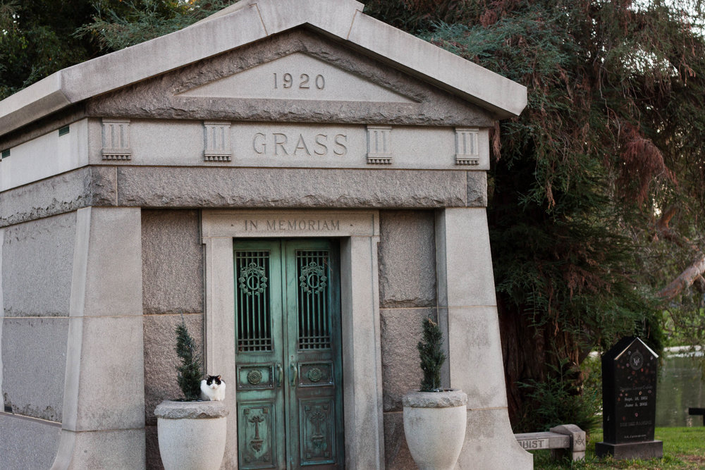 A feral cat sits outside a masoleum at  Hollywood Forever Cemetery  in Los Angeles, 2017.