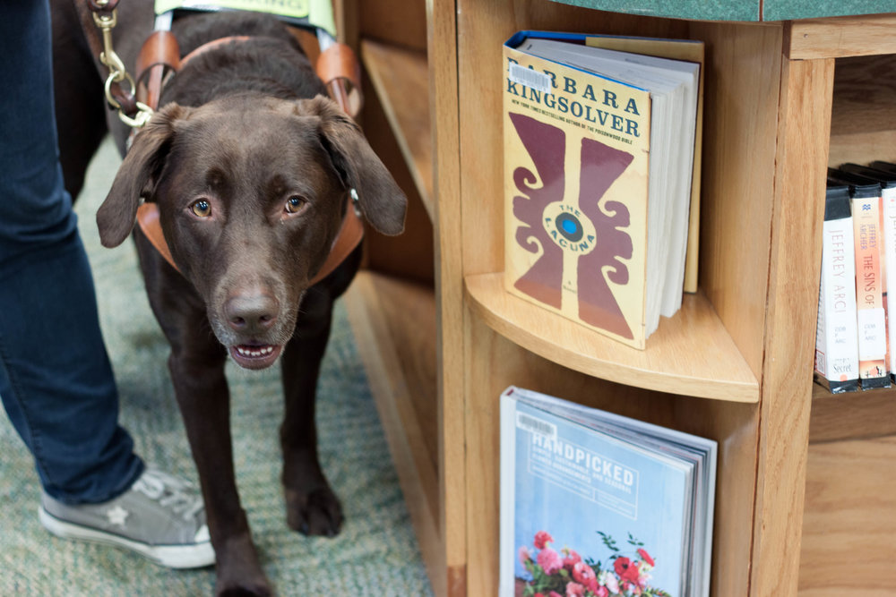 Karra , a seeing eye dog, enjoys a trip to the library with her human.