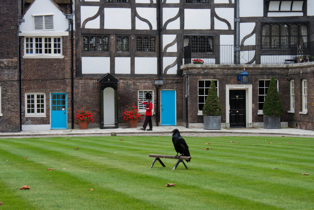 One of the ravens kept captive at the Tower of London sits on its perch while a member of the Queen's Guard marches in the background, September 2012.