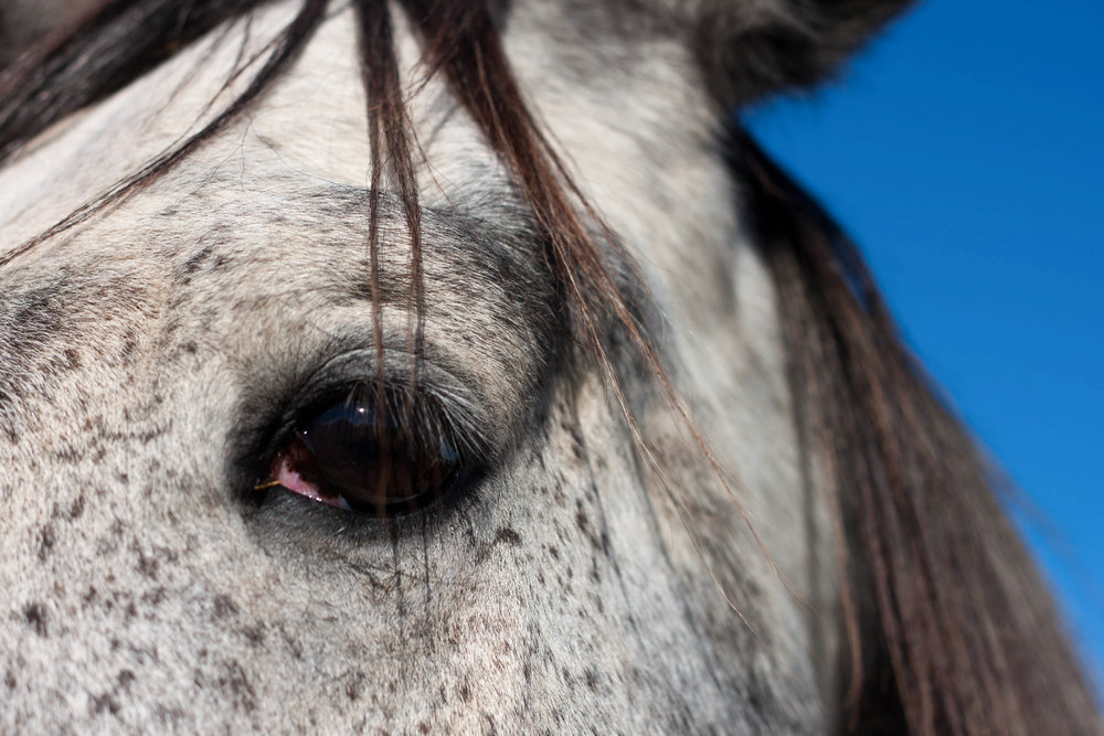 A horse keeps an eye on the humans who visit a barn in Maryland.