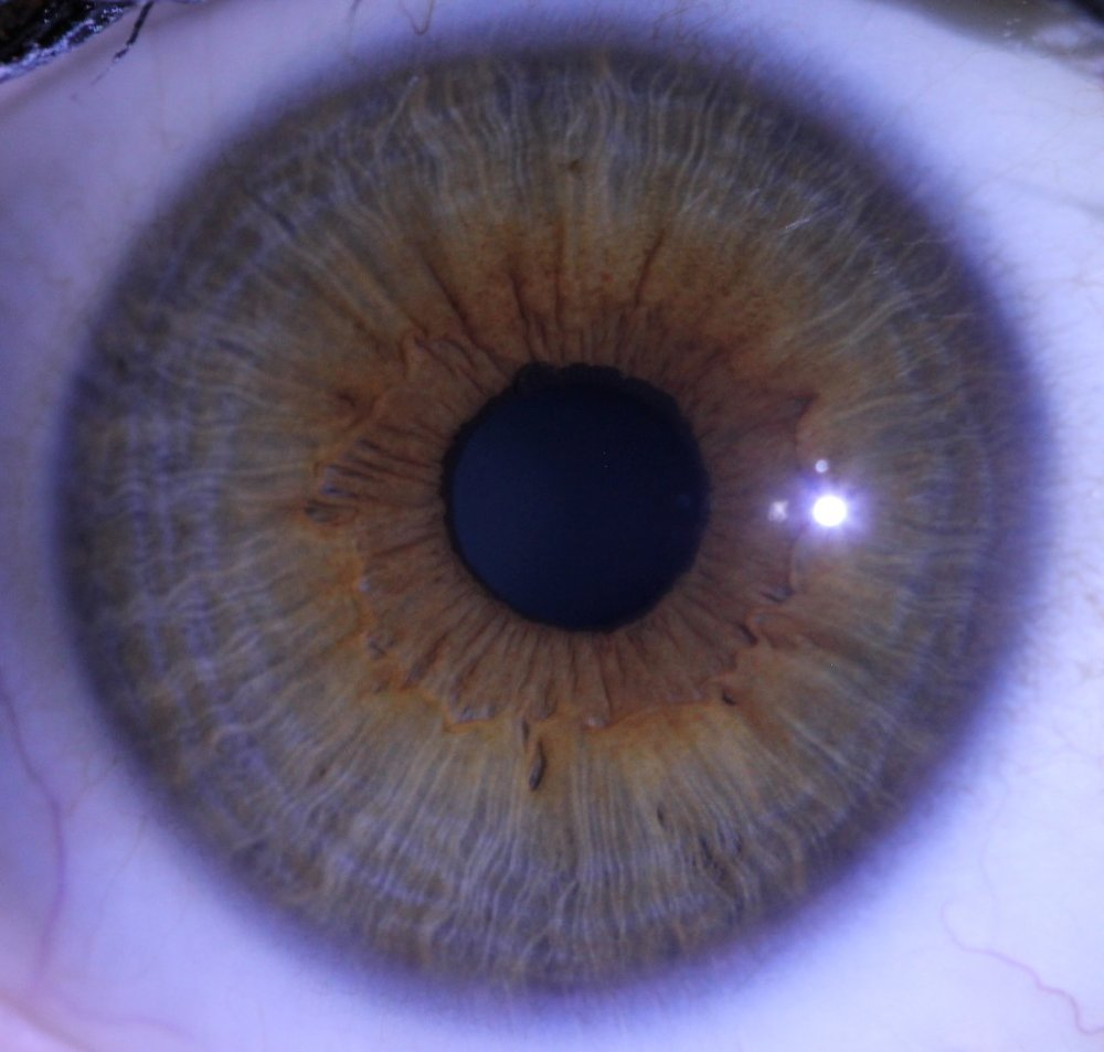 Right Eye Final Sophia Loux