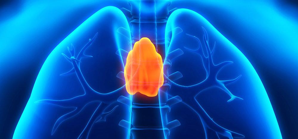 Human-Thymus-Diagram.jpg
