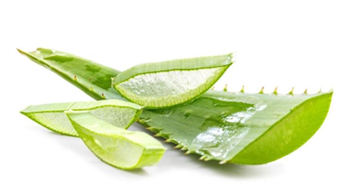 """ว่านหางจระเข้ (Aloe Vera Extract) — ผลิตภัณฑ์เสริมอาหารบุญ  เป็นผลิตภัณฑ์เสริมอาหารที่ผู้บริโภคทานอันดับหนึ่ง ผลิตภัณฑ์เสริมอาหารบุญ  """"บำรุงกระเพาะอาหาร"""" ผลิต"""