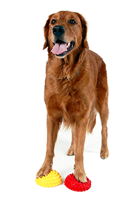 Canine separation anxiety trainer in Oakland, Piedmont, Montclair, Emeryville, Temescal, Dimond.
