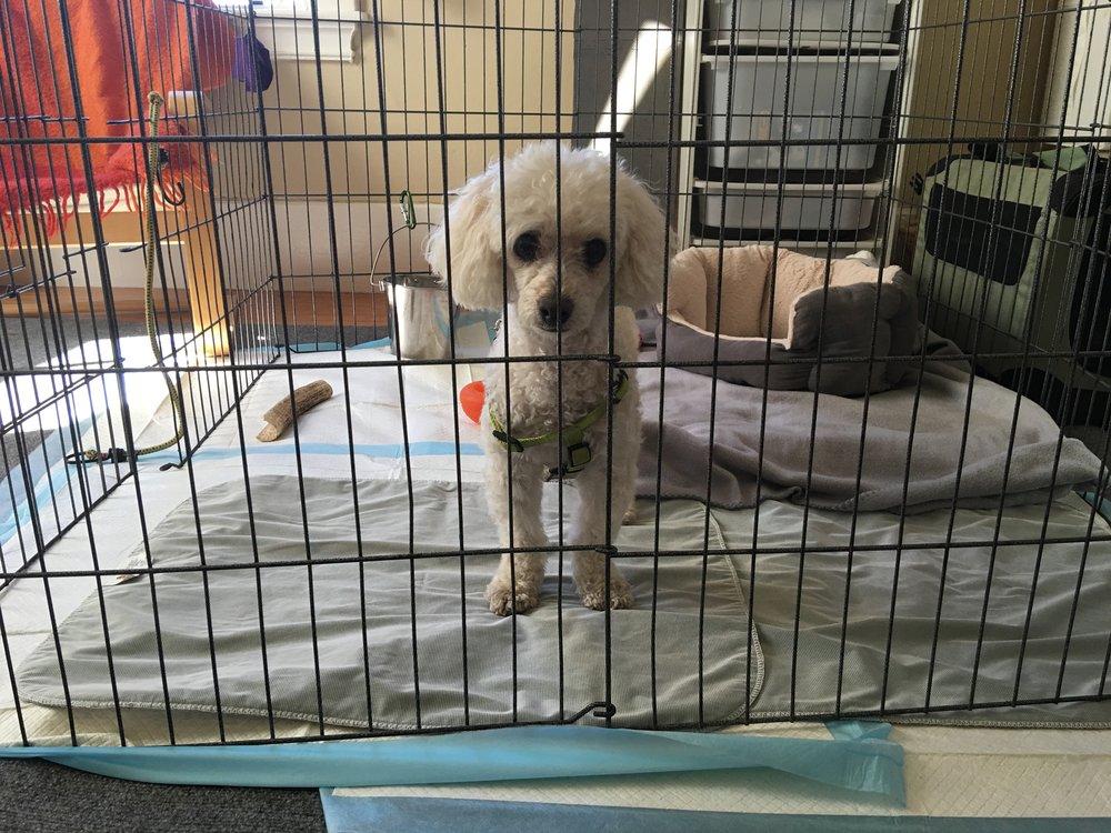 xpen management dog training