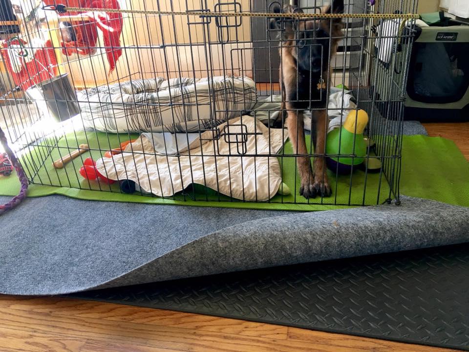 puppy confinement