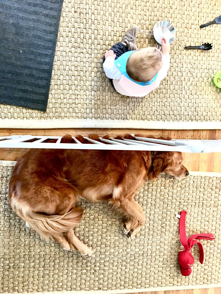 Parallel play with gate. Learning coexistence.