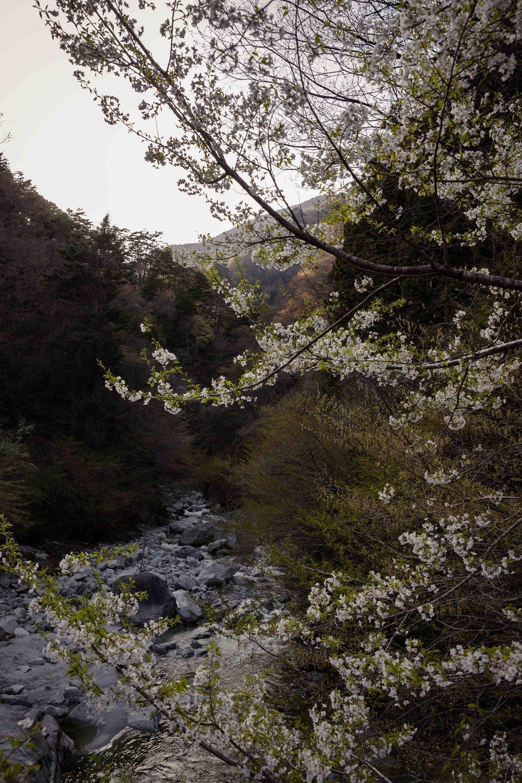 JAPAN_SML_O9A6544.JPG