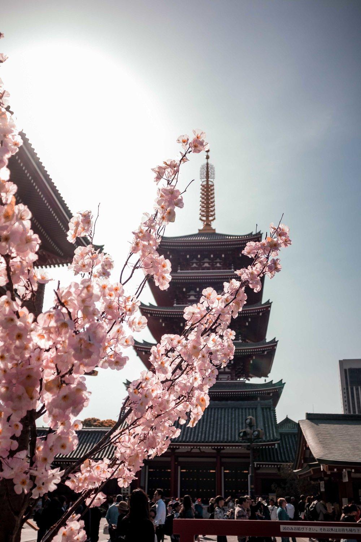JAPAN_SMLIMG_6775.JPG