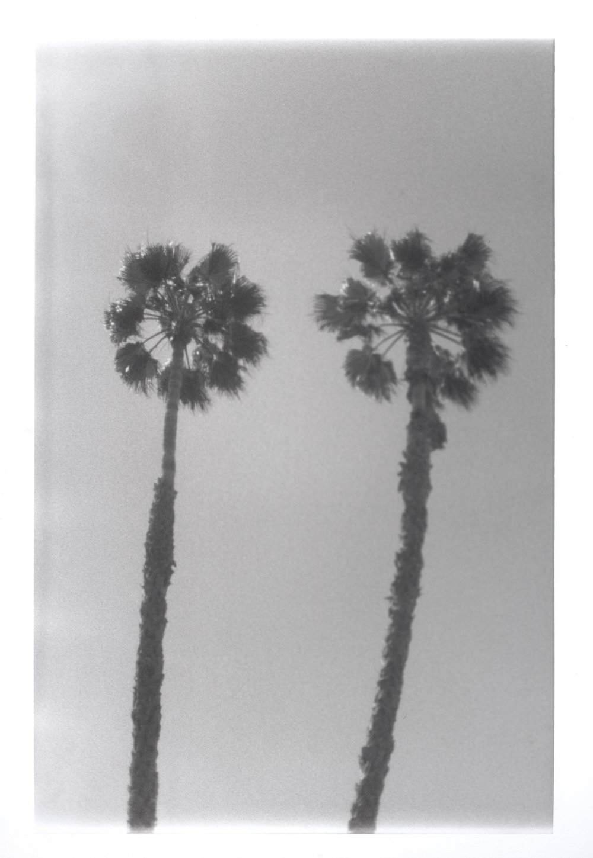 tree+001.jpg