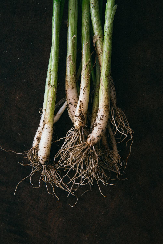 Scallion Harvest